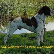 Oldexodebull s fashion cooper